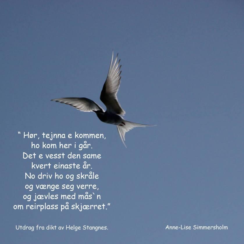 Fantarktisk. Foto: Anne-Lise Simmersholm