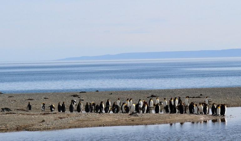 Midt på dagen tar pingvinene det med ro. Foto: Jahn Petter Johnsen, oktober 2016