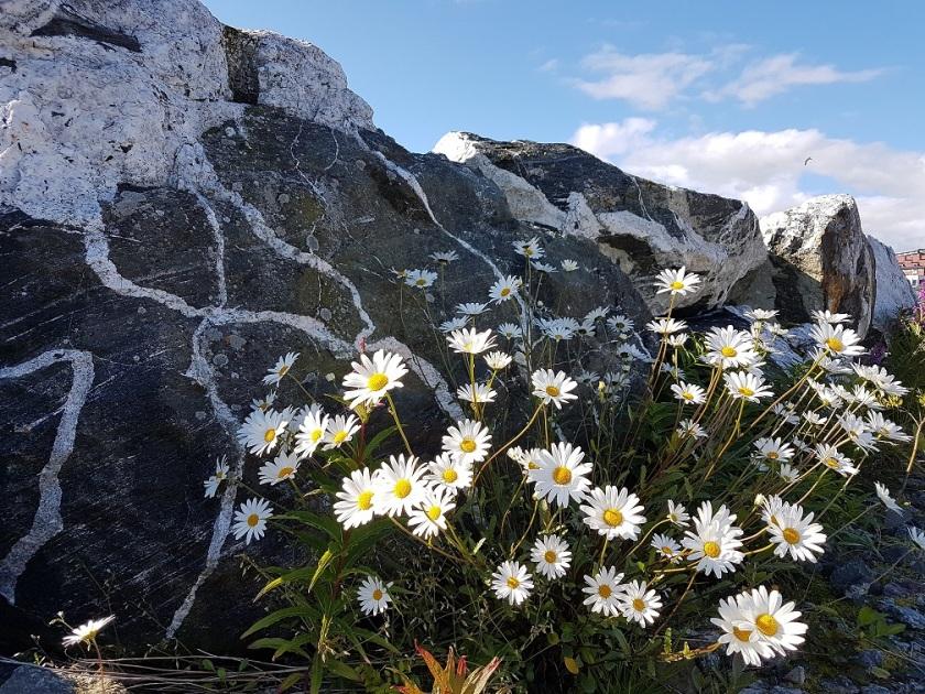 Nord-Norge. Foto: Hilde Kat. Eriksen, Nordnorsk Magasin